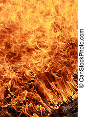 conflagration - dry defoliation and branch burning...