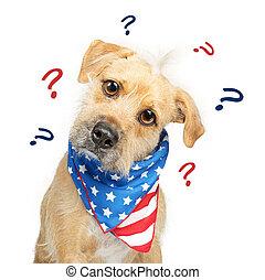confundido, político, americano, cão