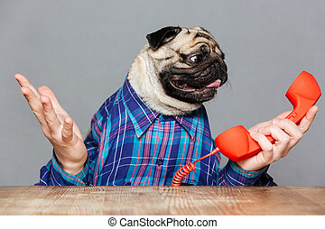 Confused pug dog with man hands holding red phone receiver -...