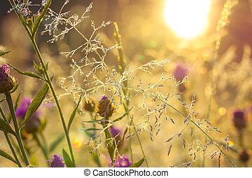 confuso, salida del sol, en, un, verano, pradera