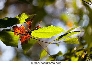 congé, automne, feuillage vert, mort