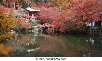 congé, temple, saison, changement, couleur, automne, rouges, japon