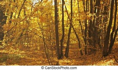 congé, voyante, wind., feuillage, prise vue., forest., jaune, brouillé, bas, arrière-plan., automne, sélectif, foliage., oscillation, foyer., couvert, tomber, octobre, doux, paysage, terrestre