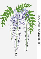 congé, wisteria, branche, fleurir