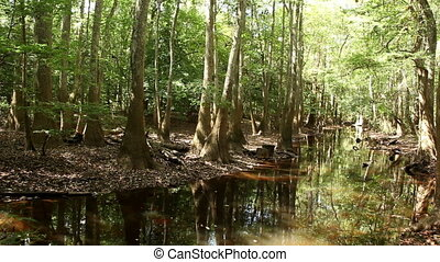 Congaree National Park with Cypress Trees
