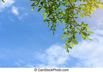 congedi verdi, con, cielo blu, fondo