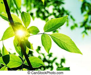 congedi verdi, con, raggio sole