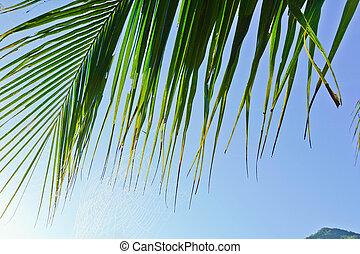 congedi verdi, di, palma, su, cielo, fondo