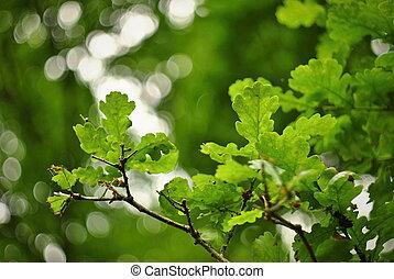 congedi verdi, quercia, seamless, struttura