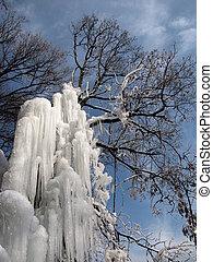 congelado, árvore