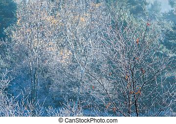 congelado, árvore, saplings, com, outono sai