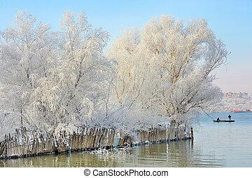 congelado, árvores