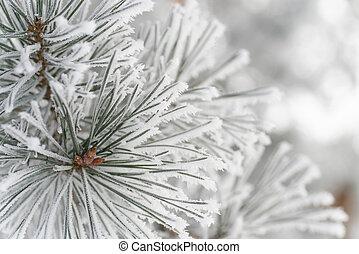 congelado, aguja, pino