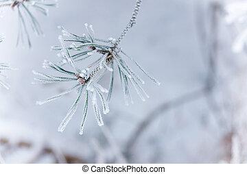 congelado, agujas