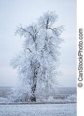 congelado, campo, inverno árvore