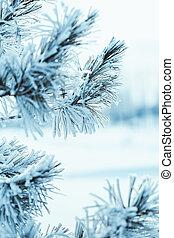 congelado, geada, asseado, inverno, tarde