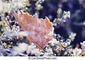 congelado, heather, flor