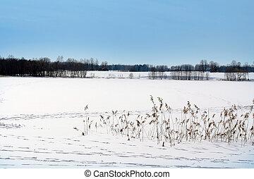 congelado, inverno, lago, coberto, por, neve