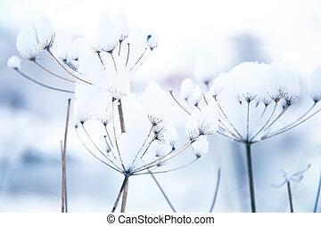 congelado, invierno, plantas