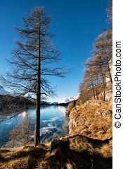 congelado, montanha, pelado, árvore, lago