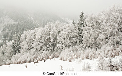 congelado, paisaje