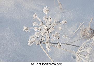 congelado, paraguas, flores, con, nieve