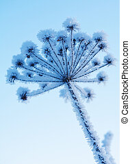 congelado, planta, inverno