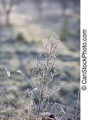 congelado, plantas