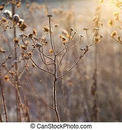 congelado, plantas, em, prado, com, backlight, em,...