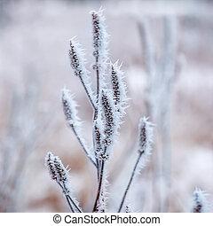 congelado, plantas, inverno, fundo