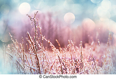 congelado, pradera