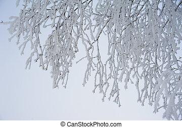 congelado, ramos, de, um, árvore