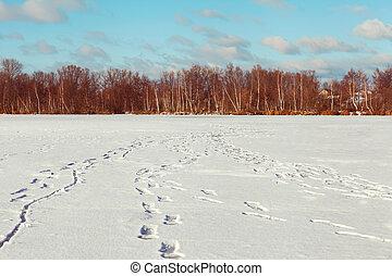 congelato, alberi inverno, illuminato, paesaggio, pittoresco