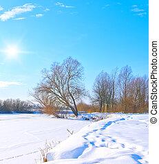 congelato, albero, soleggiato, fiume, giorno, banca