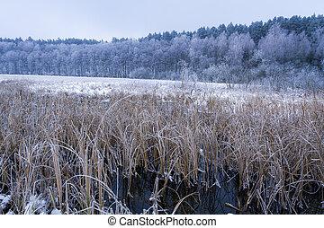 congelato, inverno, pettini, lago