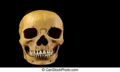 congratulations on Halloween    pumpkin and skull traditional attributes of Halloween stuff