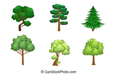 conifère, éléments, été, arbres, collection, à feuilles caduques, vecteur, conception, illustration, paysage