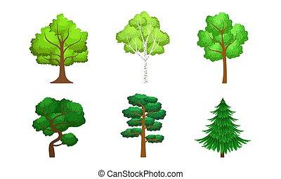 conifère, éléments, été, arbres, collection, à feuilles caduques, vecteur, vert, illustration, conception, paysage