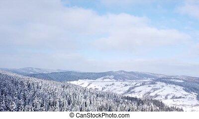 conifère, aérien, forêt, au-dessus, vue