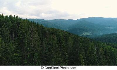 conifère, forêt, affichage montagne, sommet