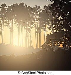 conifère, soleil, illustration, vecteur, levée, forêt