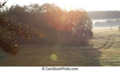 Conifer branch on hazy sunrise