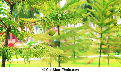 conifer trees in summer park