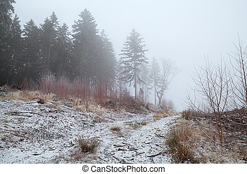 conifero, foresta, in, inverno, nebbia