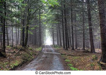 conifero, foresta, in, nebbia