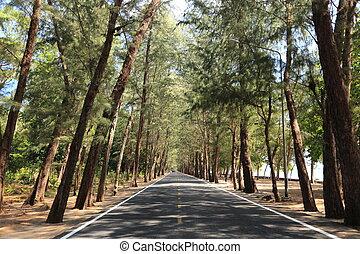 conifero, foresta, strada