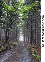 conifero, foresta, strada, nebbioso