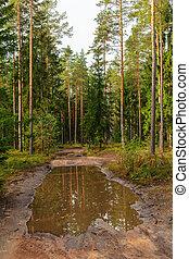 conifero, foresta, strada, sporcizia