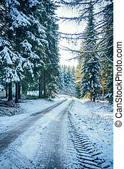 conifero, inverno, strada, foresta