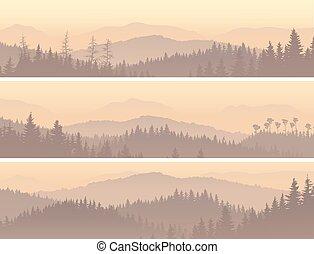 conifero, legno, in, mattina, fog.